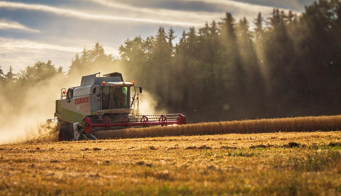Primo piano di una macchina mietitrebbiatrice in azione in un campo maturo di un'azienda agricola che ha effettuato la conversione al biologico, sullo sfondo di una foresta di conifere. Copyright foto: ThiloBecker