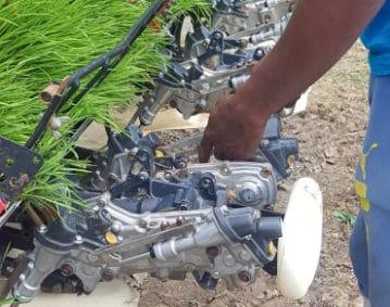 A sinistra si notano le piantine pronte per il trapianto meccanico del riso, al centro un particolare del macchinario dedicato, quindi la mano sinistra e parte del corpo abbigliato in azzurro di un operatore agricolo.