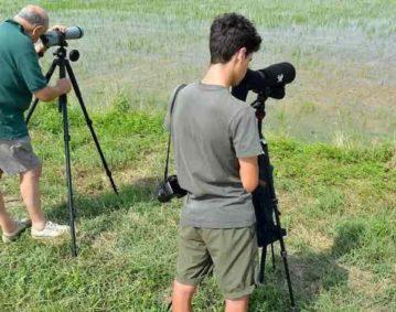 Due persone di età differenti attendono sul margine della risaia a coltivazione biologica di osservare uccelli migratori. Entrambi sono vestiti sui toni del verde e dispongono di binocoli professionali con treppiede.