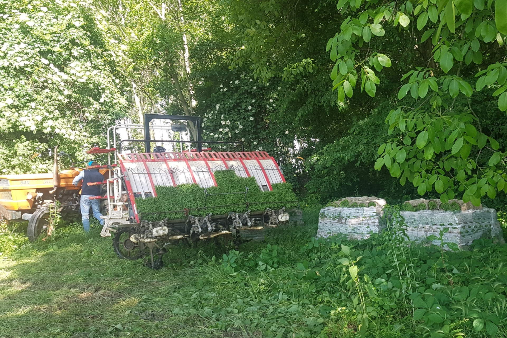 In primo piano un prato, a metà immagine, da sinistra a destra: un trattore giallo, un macchinario per il trapianto meccanico del riso, due cataste ordinate di zolle contenenti le piantine di riso da trapiantare. Sullo sfondo un bosco di latifoglie verdi.